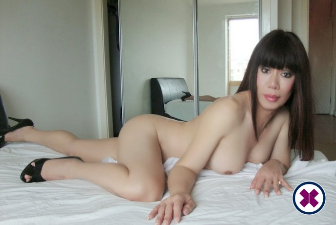 TS Anna Thai Ladyboy is one of the best massage providers in Birmingham. Book a meeting today